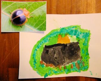 Tropical Darkling Beetle