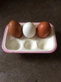 Three eggs now....