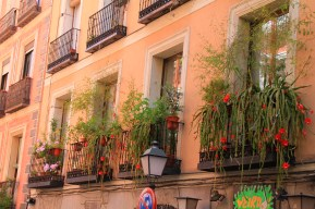 Beautiful flowers on balcony