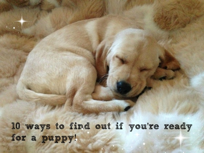 10 ways to find out if you're ready for a puppy