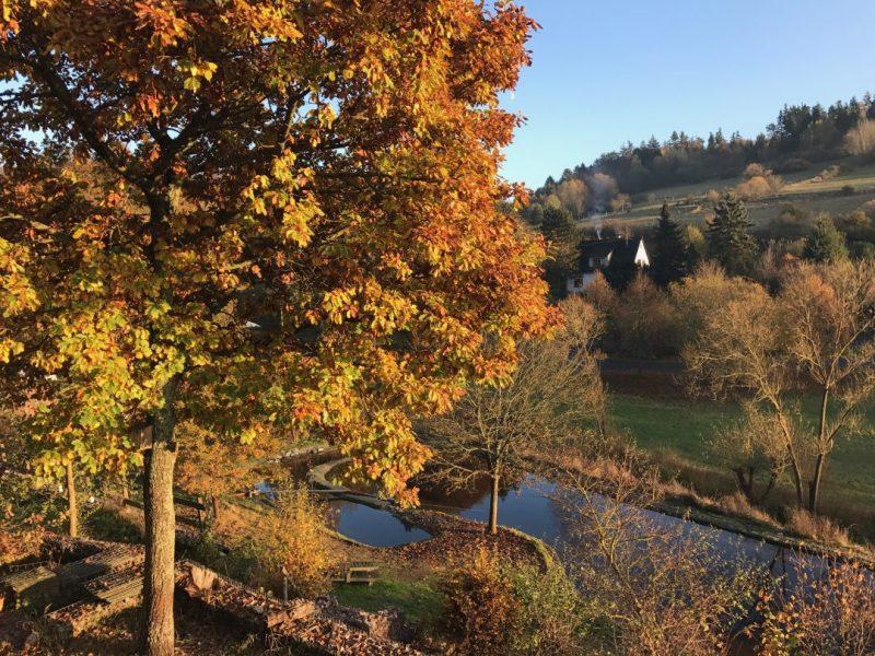 Bild Herbst Wimper