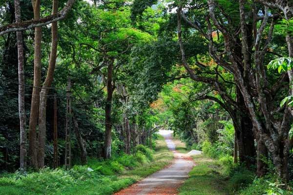 Cuc Phuong National Park (8)