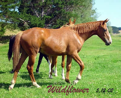 wildfower4
