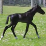 Twin filly Georgia shows some spunk