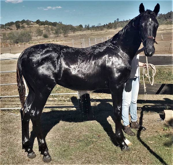 Bond after a bath before leaving Australia.