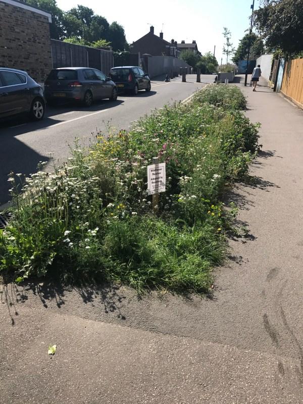 Wild flowers in Walthamstow