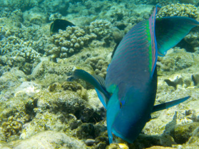 Egypte 2007 Snorkelen-5