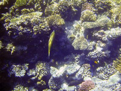 Egypte 2007 Snorkelen-9