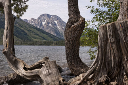 Grand Teton National Park Lake