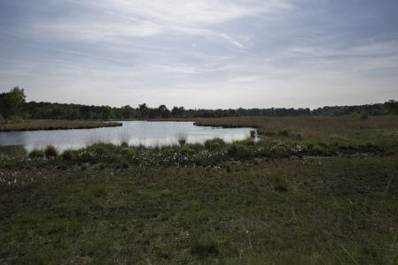 Kalmthoutse Heide 2014-9