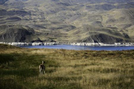 Patagonië-47