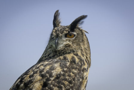 Roofvogels-2