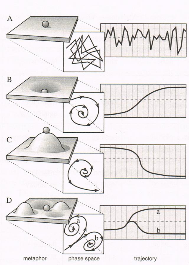De vier fasen van de Panarchy Cyclus voorgesteld als een landschap met een rollende bal