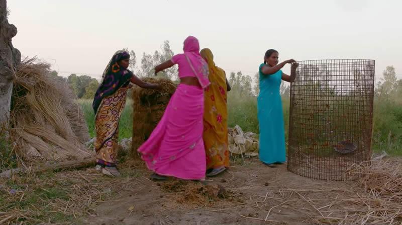 Shivansh Fertilizer and Farming