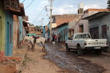 trinidad-streets-and-horse