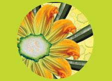 Obetz Zucchinifest Website
