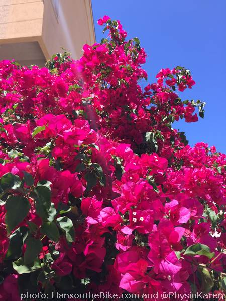 I think it is Bougainville...