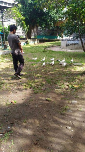 Mengejar burung