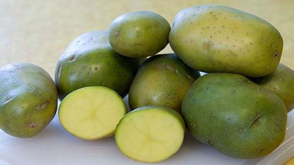Green-potato-1-2109210417