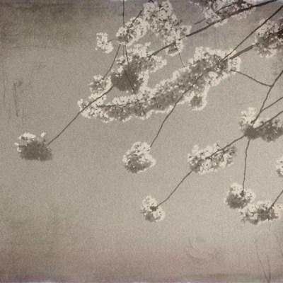 Meiji Era Photos