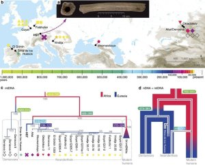 Deeply divergent archaic mitochondrial genome provides lower time boundary for African gene flow into Neanderthals