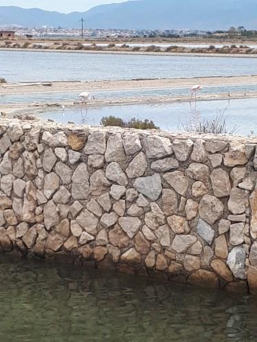 Flamingosi u Cagliariju