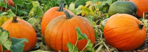 Pumpkin Patches and Corn Mazes in Sonoma County