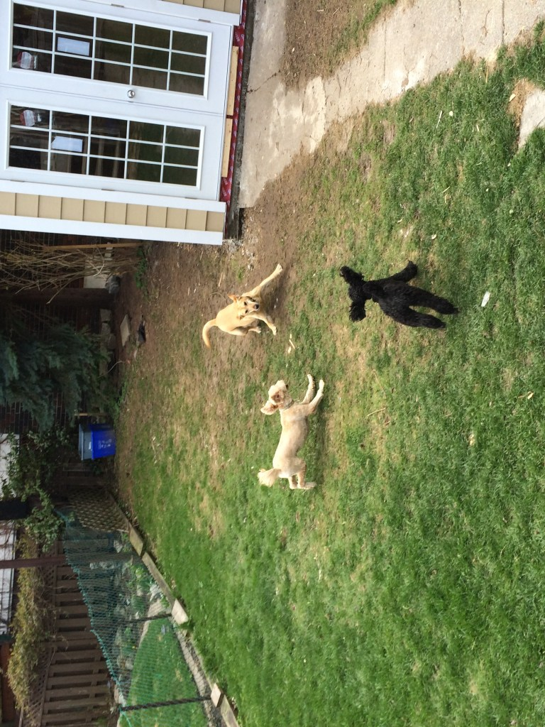 A moment of dogs experiencing  a dog's life enrichment.