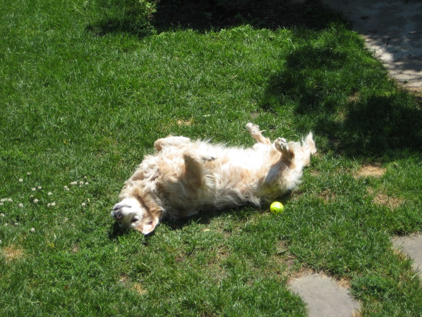 Another example of a dog living with a dog's life enrichment.