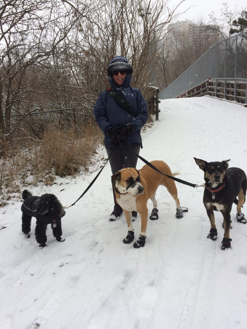 Judy at park in winter with 3 dogs