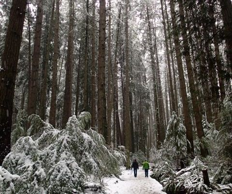 Pacific Spirit Park in the snow