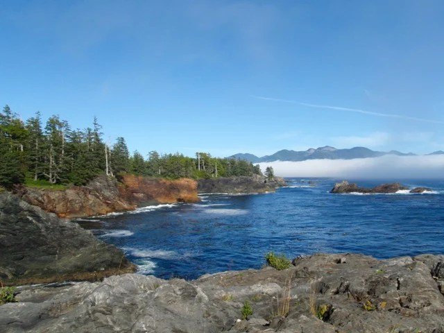 Pocket coves and headlands on the Nootka Trail