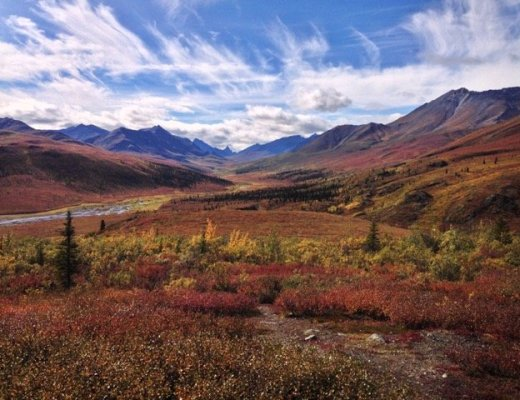Autumn in Tombstone Territorial Park