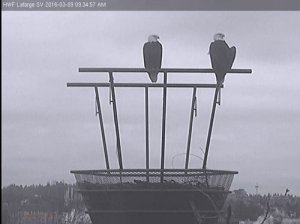 Vancouver wildlife viewing - eagle cam
