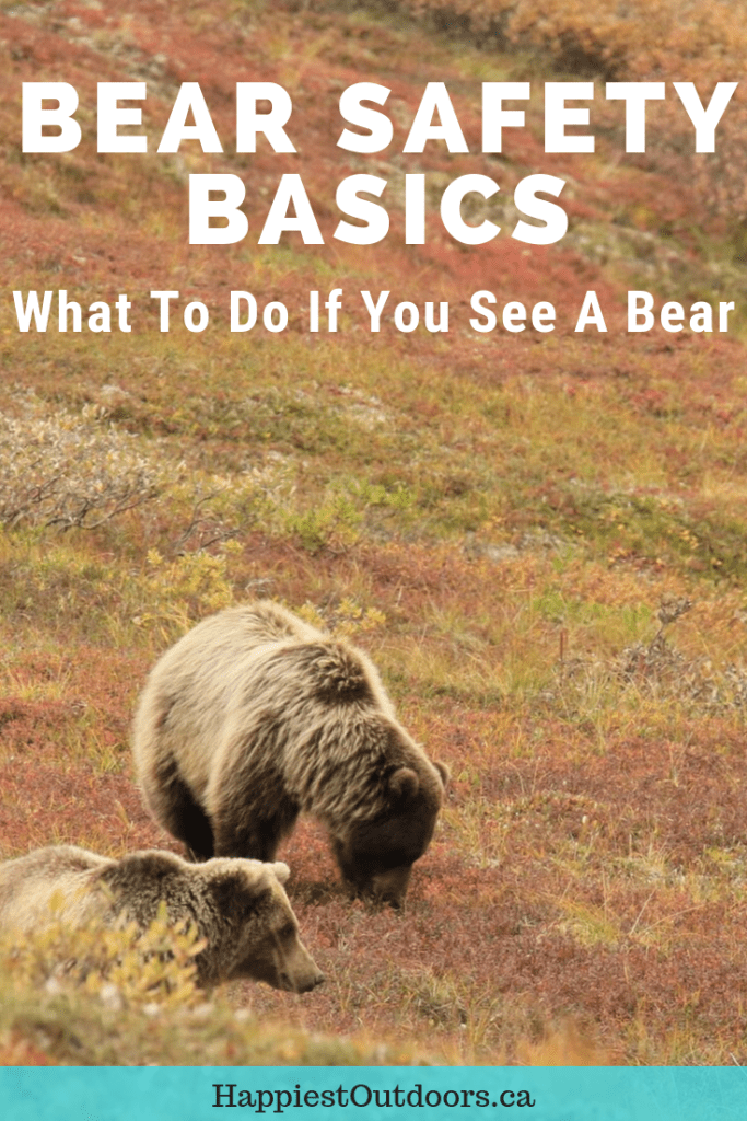 Bear safety basics: what to do if you see a bear. Be bear aware. Bear safety for hikers. #bearsafety #bears #bearawareness
