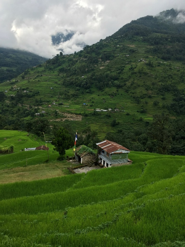 Terraced fields and jungle on the Annapurna Sanctuary Trek. 8 things I wish I knew before going trekking in Nepal