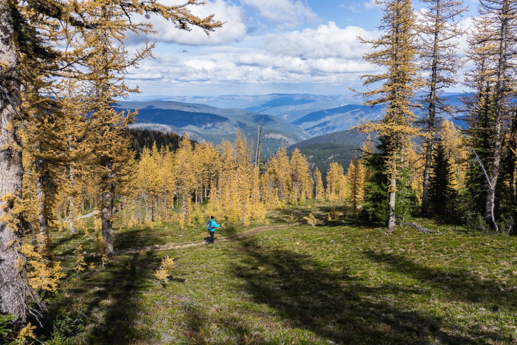Larches on the Frosty Mountain trail. Hike to the gorgeous Frosty Mountain larches in British Columbia, Canada. Go hiking in the fall to the see the larch trees change colour in Manning Park, BC, Canada.