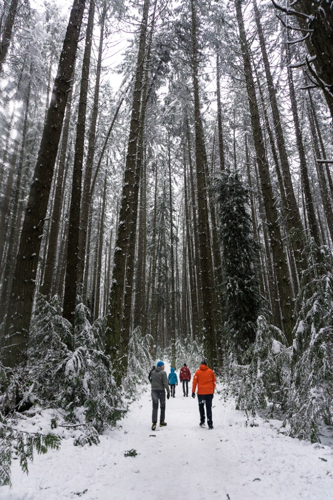 Winter walk in Pacific Spirit Park in Vancouver, BC, Canada