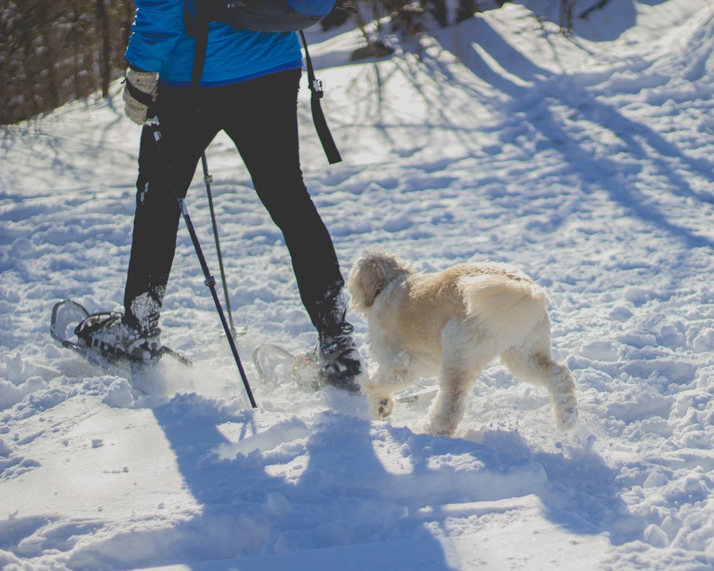 The Ultimate Guide to Snowshoeing in Vancouver.