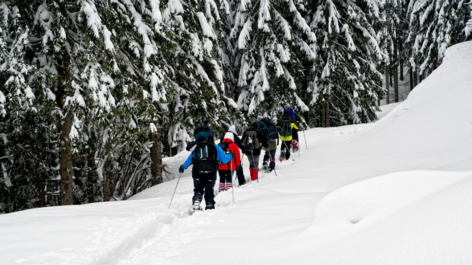 Snowshoeing on the Shannon Basin Loop at the Sea to Sky Gondola in Squamish, BC. The Ultimate Guide to Snowshoeing in Squamish.