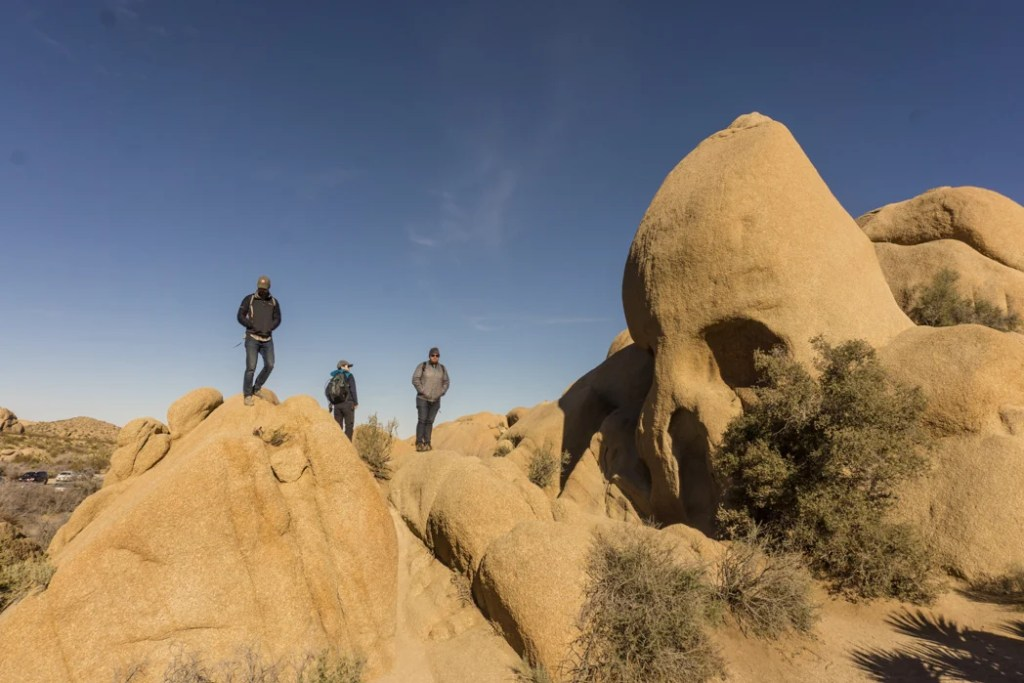 Skull rock in Joshua Tree National Park, one of 15 awesome things to do in Joshua Tree. Add visiting Skull Rock to your Joshua Tree bucketlist.