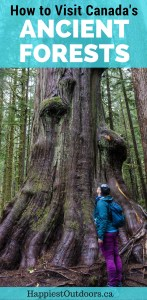How to visit Canada's ancient forests in Port Renfrew, British Columbia on Vancouver Island. Visit Avatar Grove, Big Lonely Doug and more giant old growth trees.