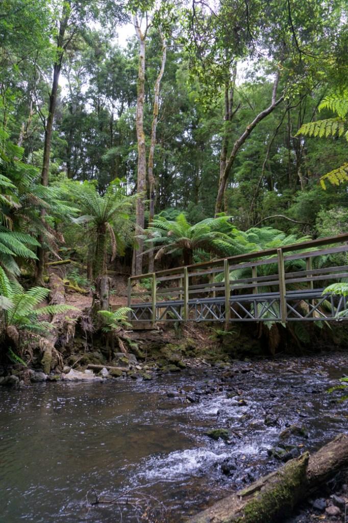 Julius River on the Tarkine Drive in Tasmania