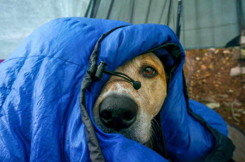Frank the dog snuggled inside a sleeping bag. Learn how to Leave No Trace with dogs by bringing warm gear so you don't have to rely on a campfire.
