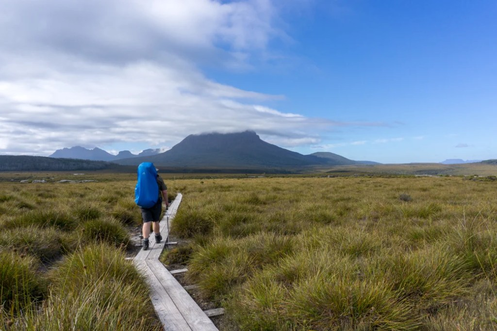 Walking across buttongrass plains on the third Overland Track section from Windermere to Pelion