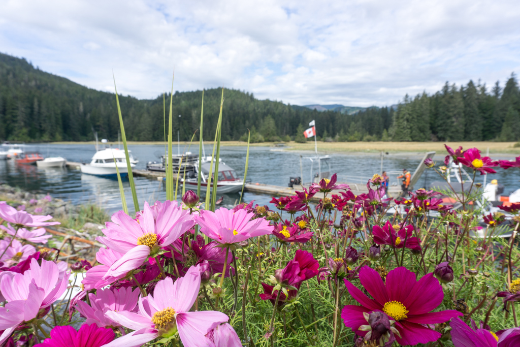 Flowers in front of the Gordon river ferry dock at the south end of the West Coast Trail