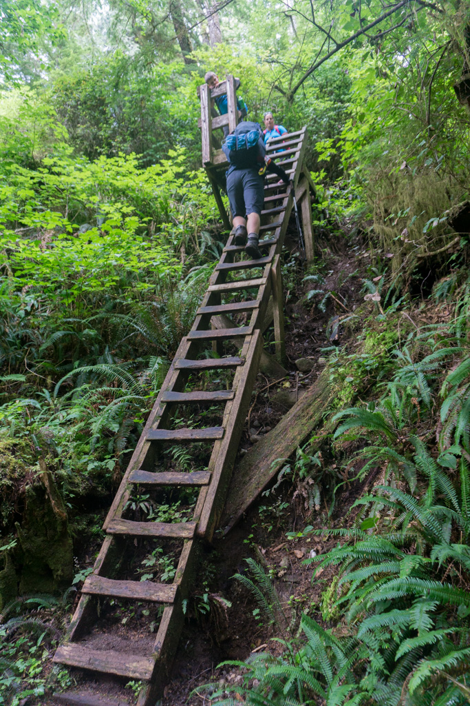 Hikers climbing a ladder on the northern-most part of the West Coast Trail