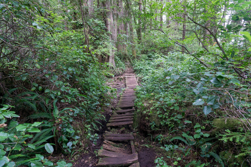 A section of old boardwalk on the West Coast Trail