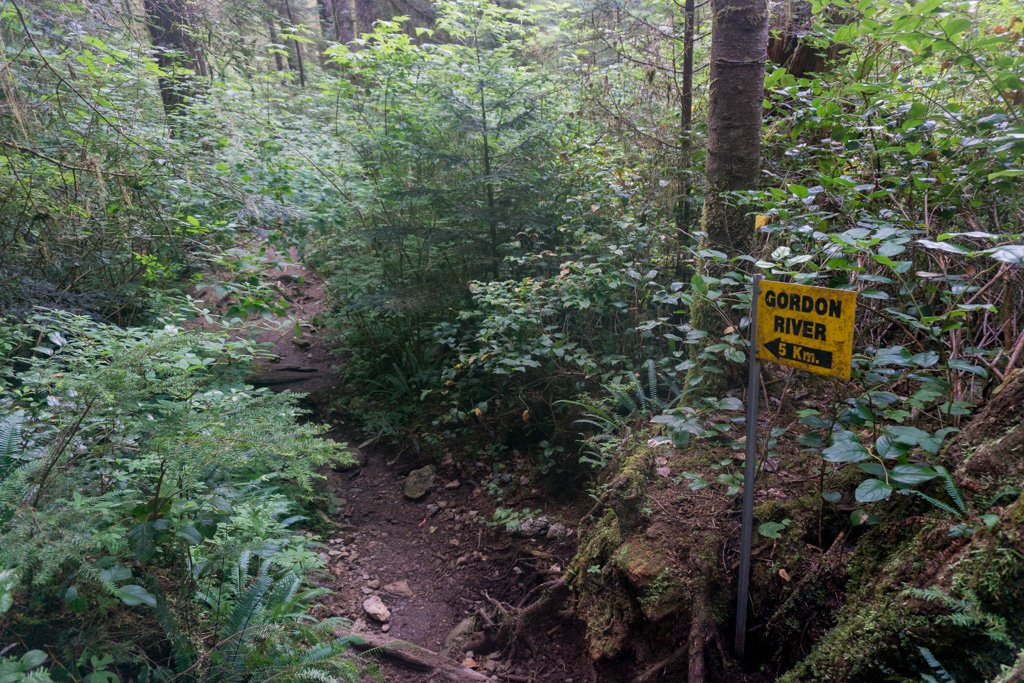 Lots of brush on the trail at the Thrasher Cove junction on the West Coast Trail