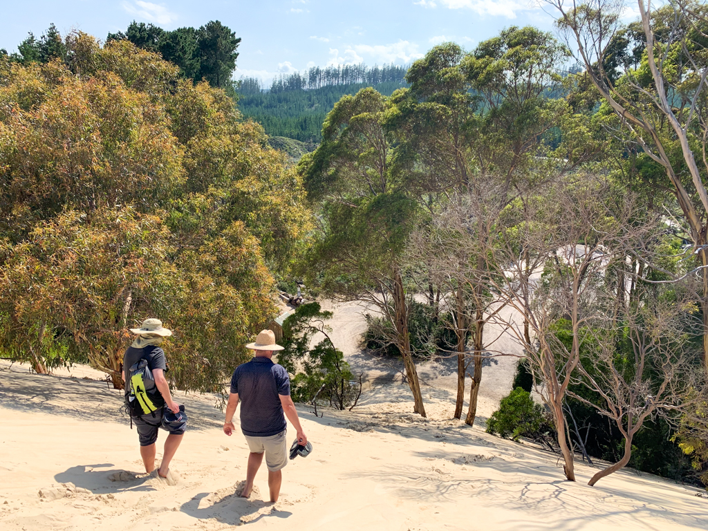 People walking down a dune into the forest at Henty Dunes near Strahan on Tasmania's West Coast